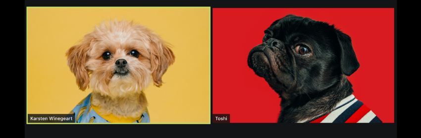 Dogs in a Zoom call